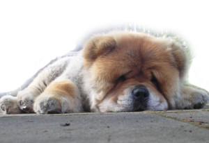 Elfáradtam!
